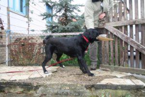 Training, Hund holt Post an der Pforte